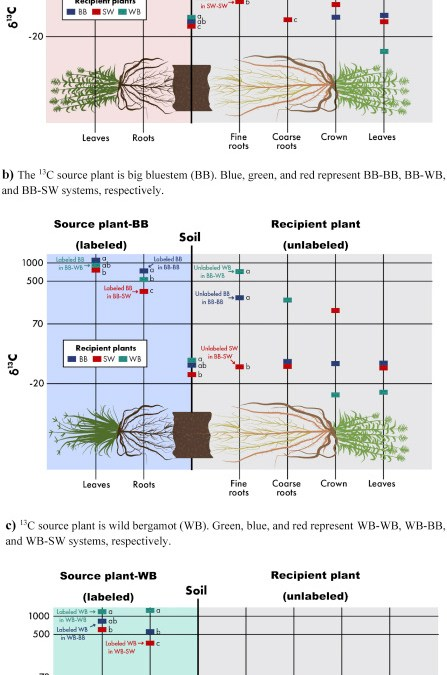 Belowground Interplant Carbon Transfer Promotes Soil Carbon Gains in Diverse Plant Communities
