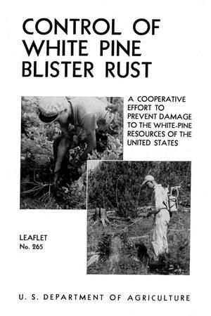 Blister Rust