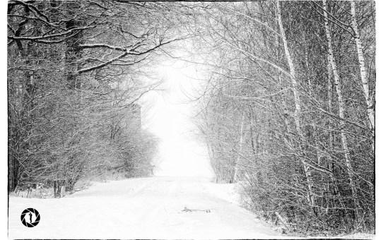 Winter Monochrome B&W