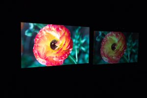 Dolby Flower Images