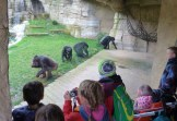 2017-05-04 Zoo Hannover 067-be-kl