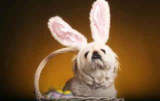 Gift basket for Easter