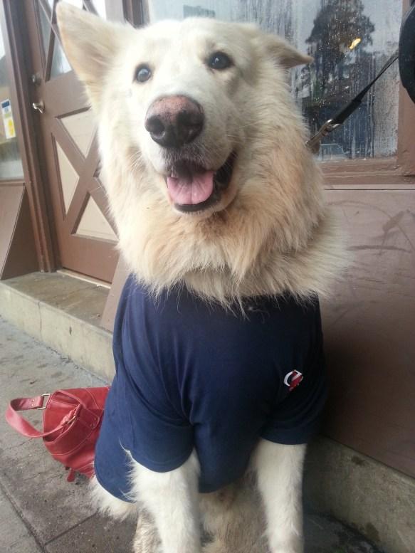 picket-dog