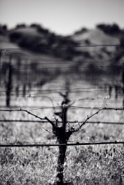California vineyard #landscape #photography