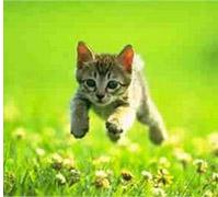 amatér mačička striekať
