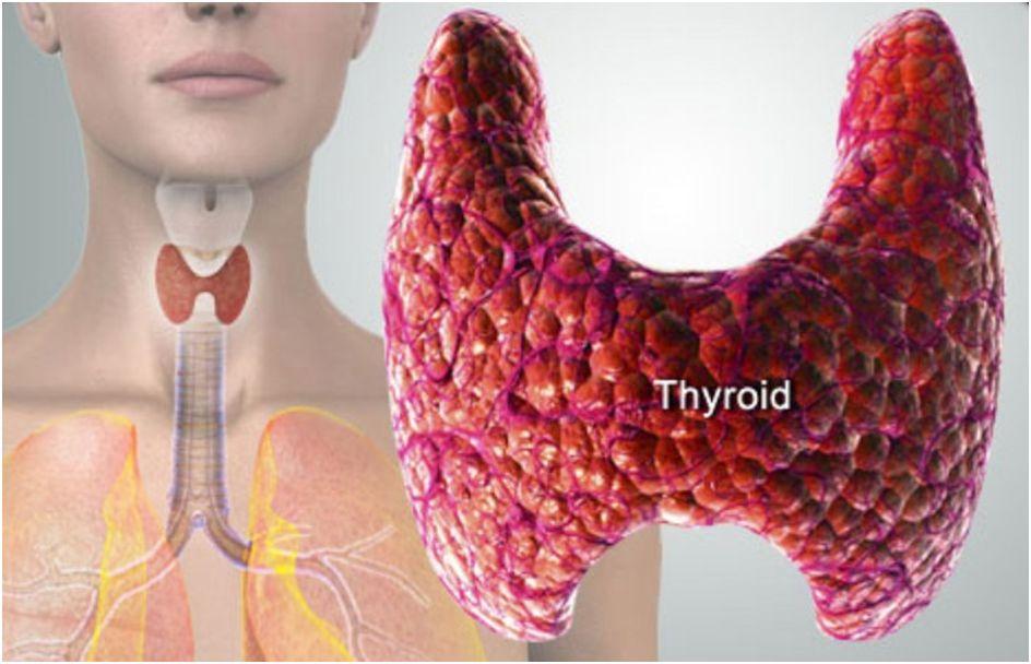 ΘΥΡΟΞΙΝΗ Τ4 (Thyroxine)