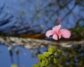 Flower at Laguna Azul, Sauce