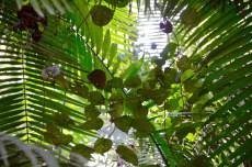Amazonian rainforest view
