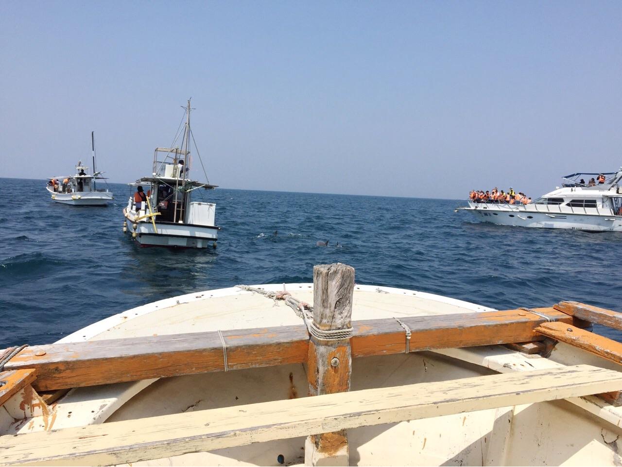 イルカウォッチング船