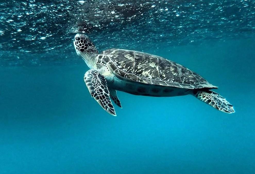 Plongée sous-marine à la Réserve Cousteau, de jour comme de nuit