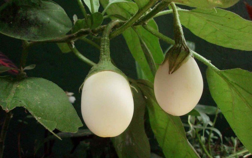 Protón de Huevo