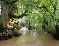 The Cachiví River