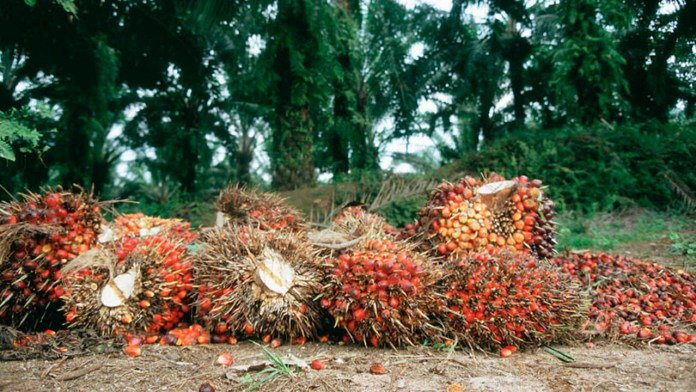 Requirements of marketing high quality palm oil in cities   3