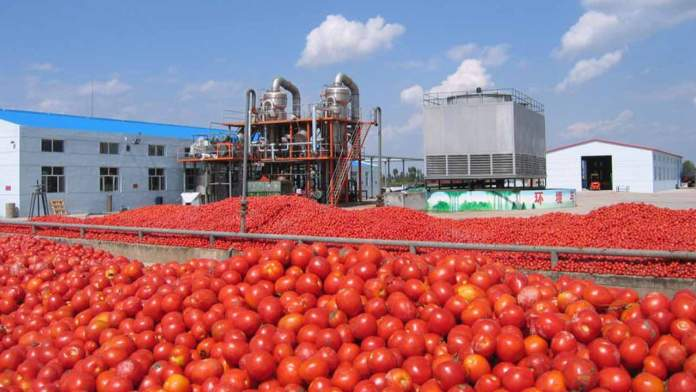 Processors ask goverment to review tomato paste policy 1