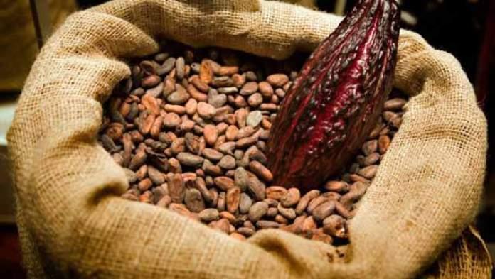 84,000 lose jobs as 16 cocoa companies go under 3