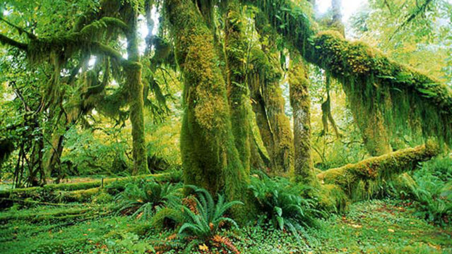 Experts Urge Campaign To Protect Nation S Biodiversity