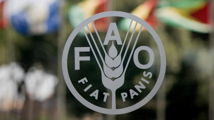 FAO kicks off distribution of seeds, fertiliser to farmers 1