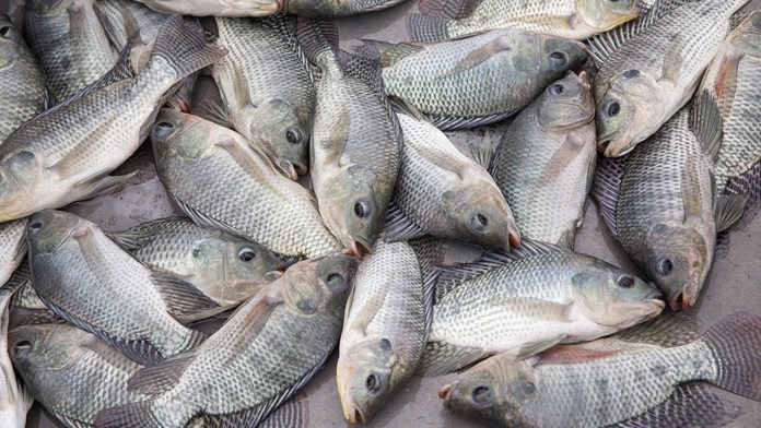 Don lists ways to stop fish importation   1