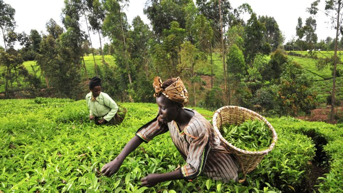 Group advocates more rural women, youth involvement in farming 1
