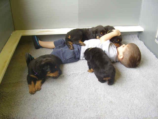 Resultado de imagen para Rottweiler dog, hugging a child