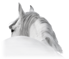 Guardian Animal Soap's hand made horse soap and dog soap is made using Essential and Carrier Oils. Inhibits lice, ticks and fleas. Look their skin and coat. There are no hardeners or preservatives used in our pet soap