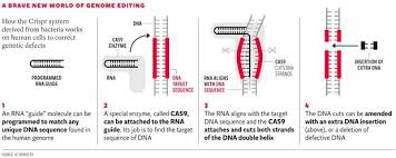 Genetic Therapy Crispr Radical Game-Changer Against Incurable Conditions