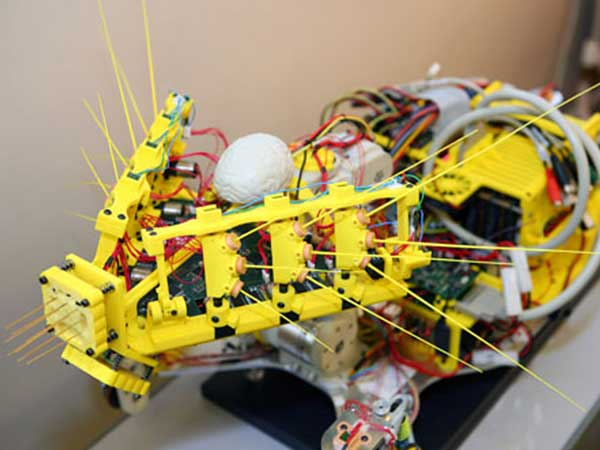 Robots With Whiskers Bring Human/Machine Interfaces Closer to Reality