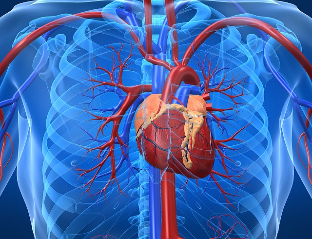 Cardiovascular Disease: Prevent the Natural Way