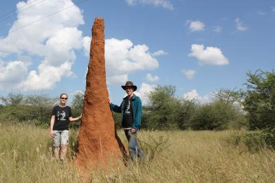 Team researchers Kirstin Petersen and Justin Werfel designed their robots on termites