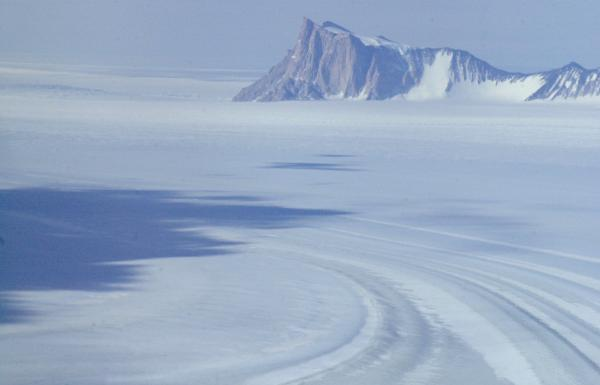Insect With Smallest Genome Spends Most of Its Life Frozen in Antarctica