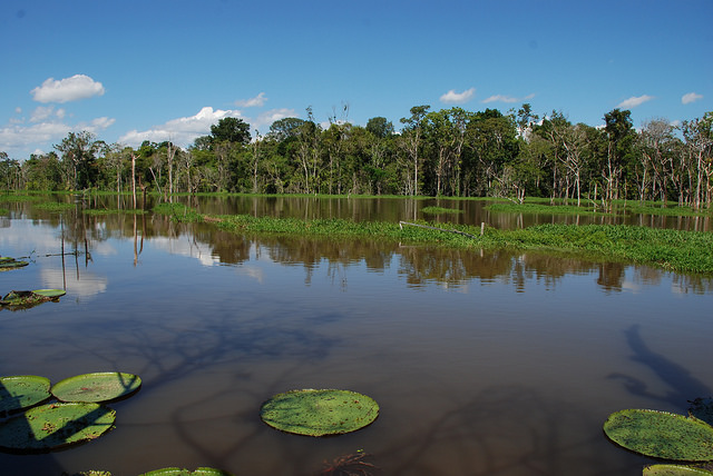 Golden Mussels Invading Amazon River