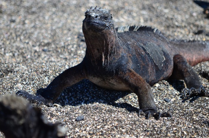 Galapagos Bans Fireworks to Protect Wildlife