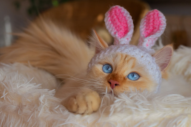 Easter Is Coming: Do Not Kill Your Pets