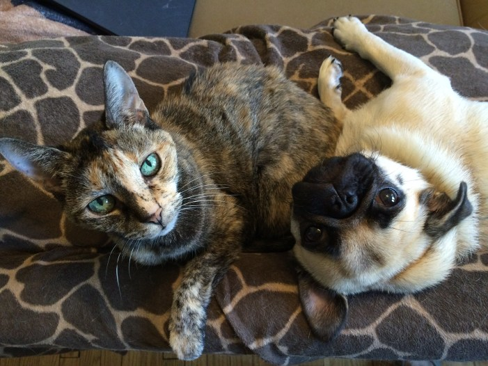 COVID-19 Found in Cats and a Dog in US and New Symptoms Added by CDC