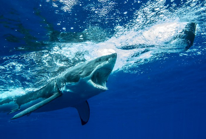 Maui Waters Produce Shark Attack [Video]