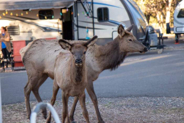 RV Parks Are Worth the Investment