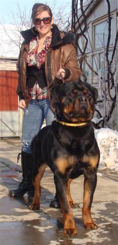 serbia2011284-1