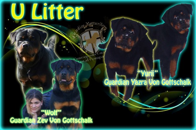 ULitter_add