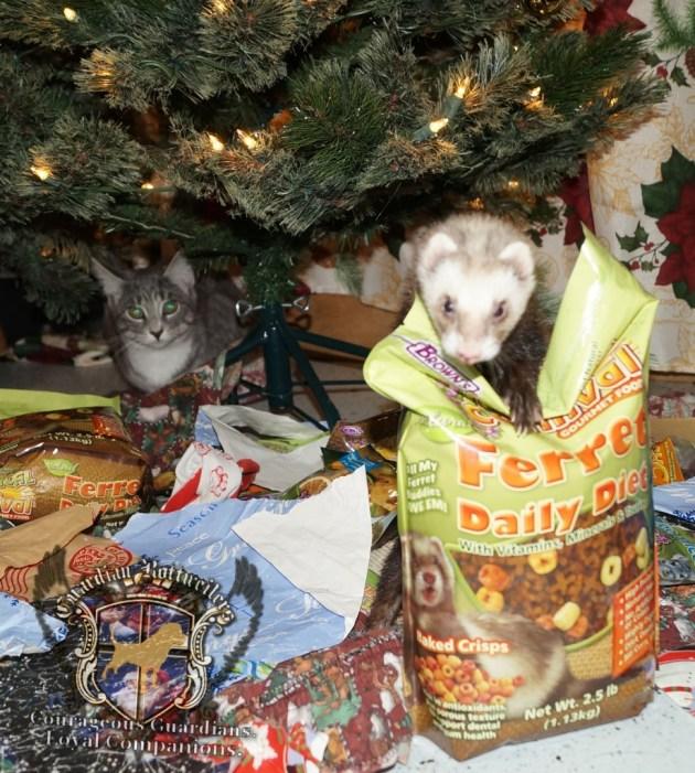 ChristmasMorning_2014_9912