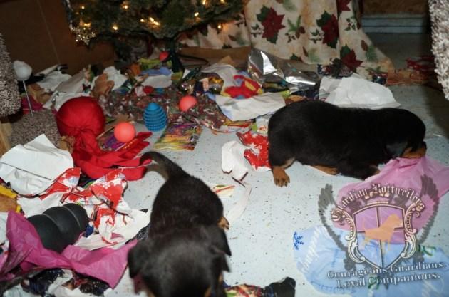 ChristmasMorning_2014_9934