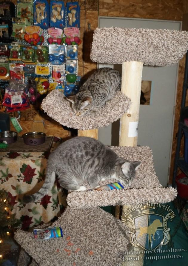 ChristmasMorning_2014_9941