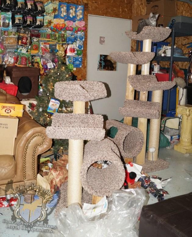 ChristmasMorning_2014_9952