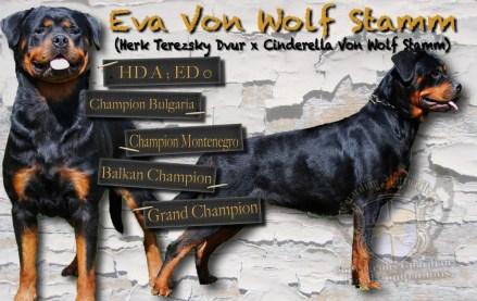 Eva_V_Wolf_Stamm_Card