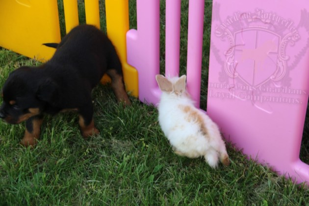 BunniesGeesePuppies30