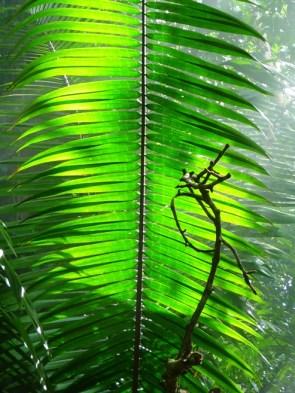 jungle art?