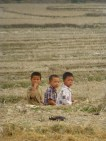 boys in the rice paddies