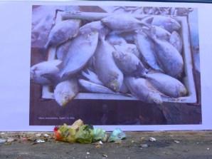 fish and rubbish