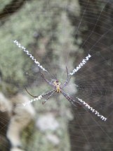interesting spider web