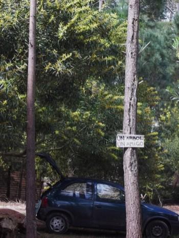 Un árbol, un amigo - Foto compartida por Beatriz