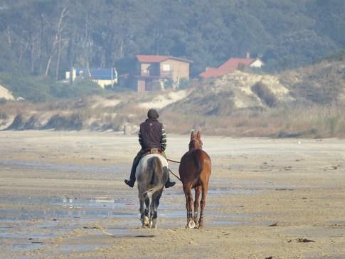 Caballos en la playa